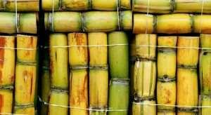 home_callouts_sugarcane