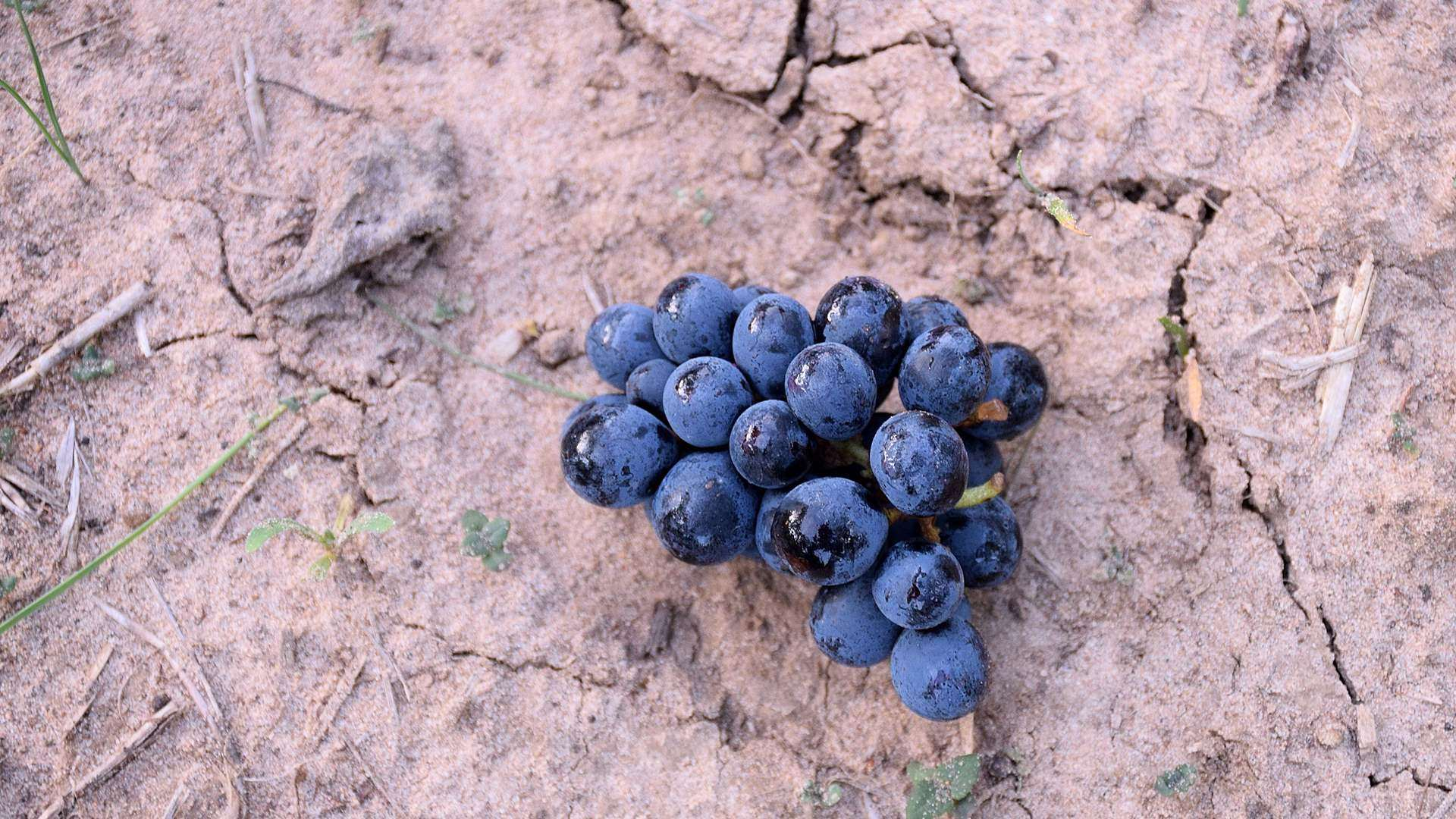 Feudi di Guagnano vini del Salento