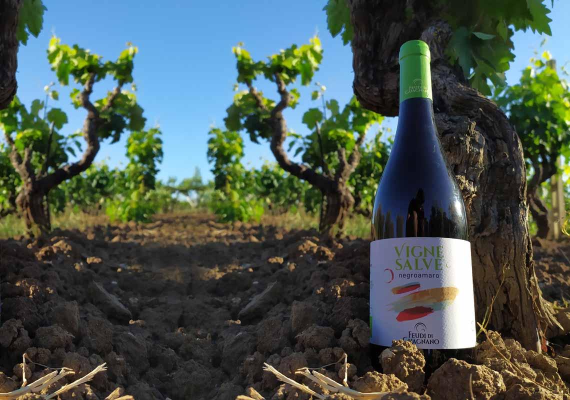 Vignesalve, la nuova linea di vini bio a basso contenuto di solfiti