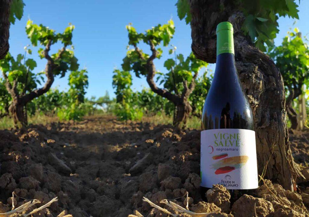 vignesalve organic wine