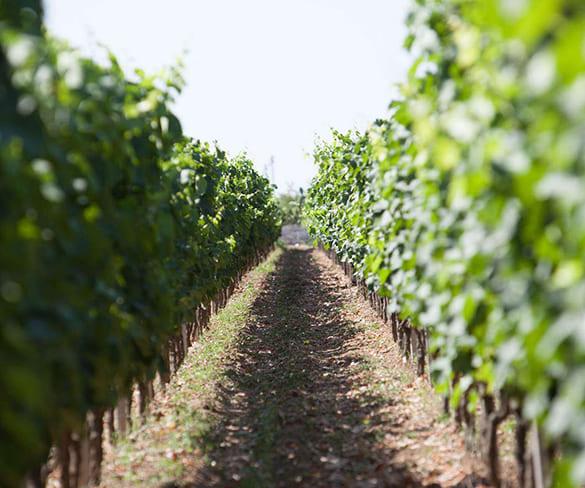tour-in-the-negroamaro-lands-feudi-di-guagnano-winery-salento-puglia
